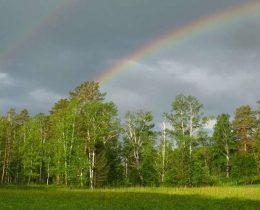 Бажовские места лес радуга