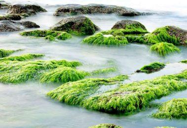 Водросли вода болото
